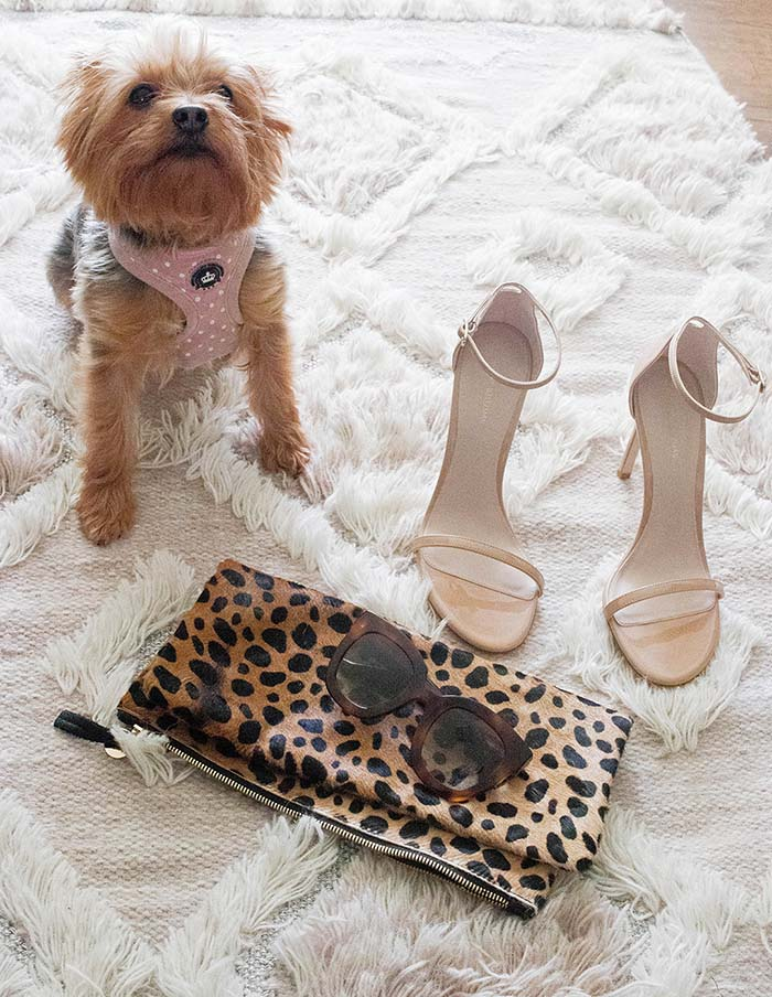 Candie Anderson's Yorkie Francesca poses with her Stuart Weitzman Nudistsong heels, Clare V leopard print clutch and Gucci sunglasses.