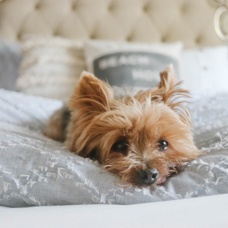 Lifestyle expert, influencer and blogger Candace Rose Anderson of the blog Candie Anderson candieanderson.com shares tips on how to recreate her beautiful coastal inspired bedroom with items from Walmart. Her dog Francesca (a Yorkie) loves her chambray bedding.